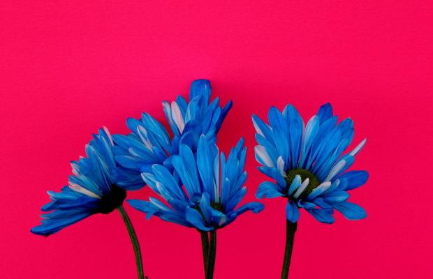 Dzień Matki. Dzień Dziecka. Nie wszystko jest różowe. Błękitny MAK