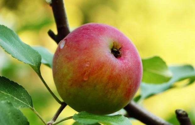 Rajska moc w owocach
