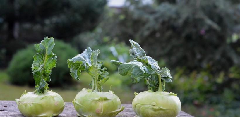 Kalarepa – słodkie i odżywcze warzywo