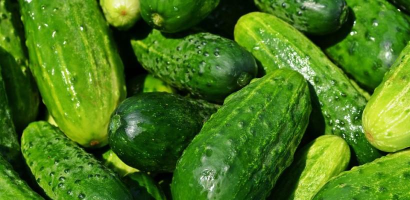 Ogórek: warzywo niepospolite