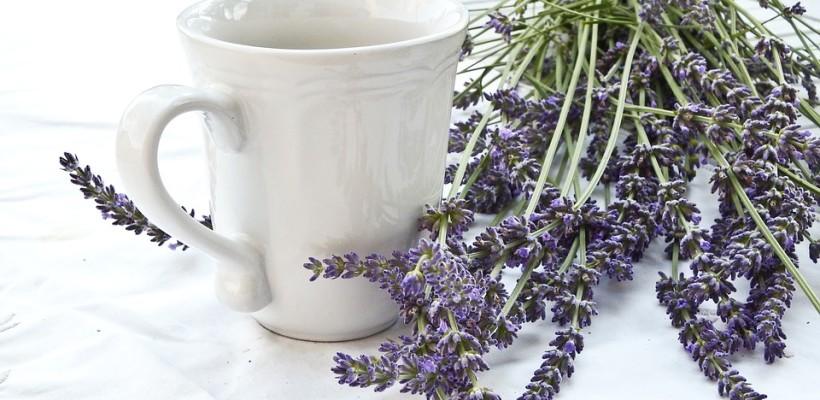 Lawenda – dużo więcej niż piękny zapach