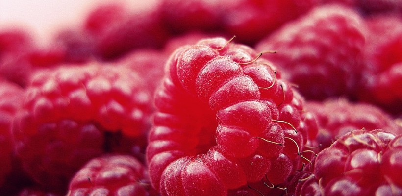 Maliny: owoce pełne zdrowia