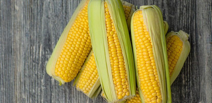 Kukurydza – skusisz się?