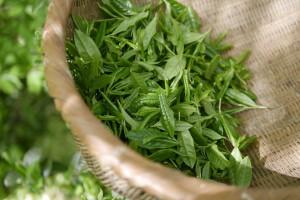 green-tea-5301025_960_720