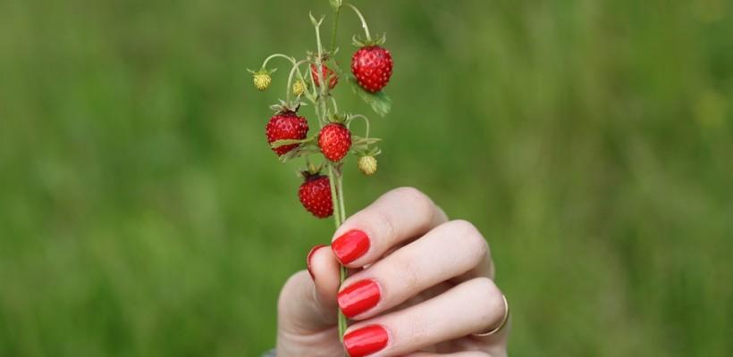 Poziomka – filigranowa roślina o ogromnej sile zdrowotnej