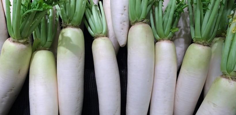 Rzepa i rzodkiew to dwa różne warzywa